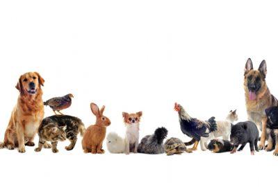 Vakcinos ir veterinariniai produktai